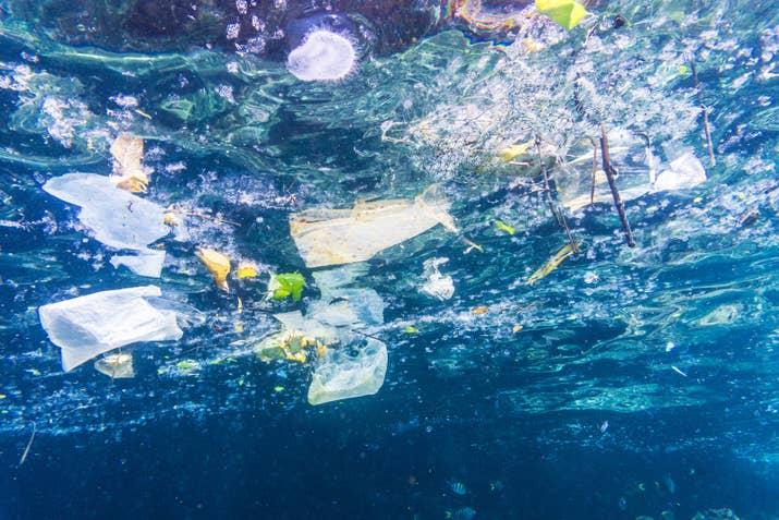 innocents tortugues, balenes, peixos, ocellets i altres animals moren ofegats per consumir trossos de bosses per error o a l'confondre'ls amb menjar.