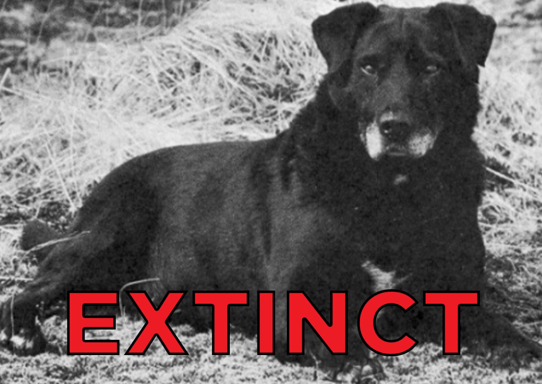These Extinct Dog Breeds Were The
