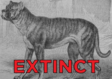 These Extinct Dog Breeds Were The Goodest Boyes Of Yesteryear