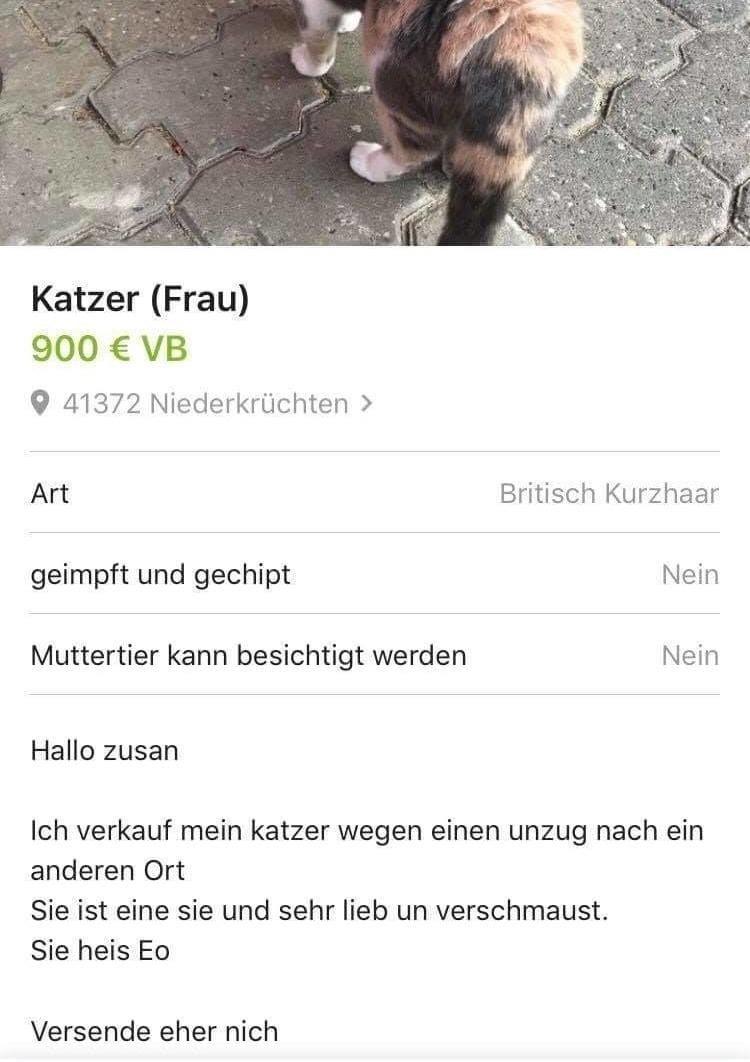 31 Ebay Kleinanzeigen Screenshots Bei Denen Du Erst Lachen Und Dann
