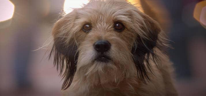 Este é um reinício do clássico de 1974.  Ele conta a história de um cão vadio que encontra amizade de duas crianças adoradoras - que então são sequestradas! Veja se: você ama cachorros! Rotten Tomatoes score: 60%