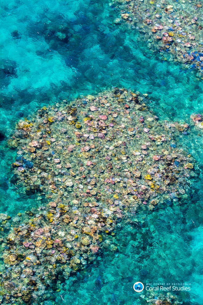 An aerial image showing bleaching damage on the Great barrier Reef.