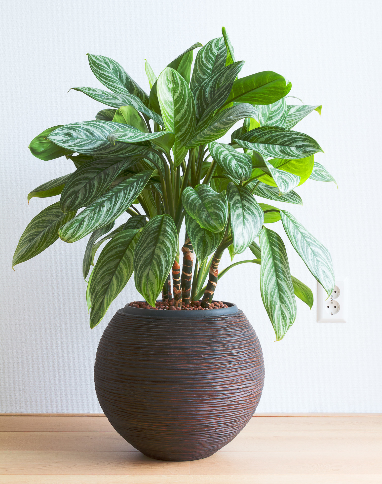 15 Houseplants That Can Remove Toxins In Your Home