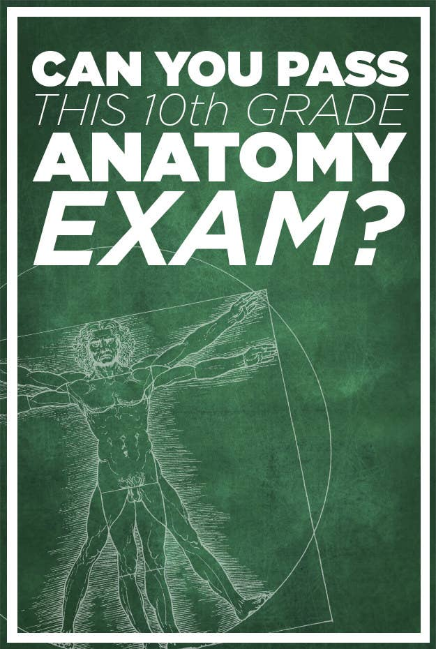 Can You Score At Least 8/10 On This 10th Grade Anatomy Test?