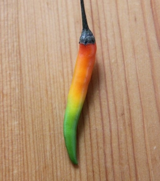 A pepper that has multiple colors from green to red