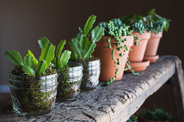 15 Zimmerpflanzen, die nicht mal du umbringen kannst