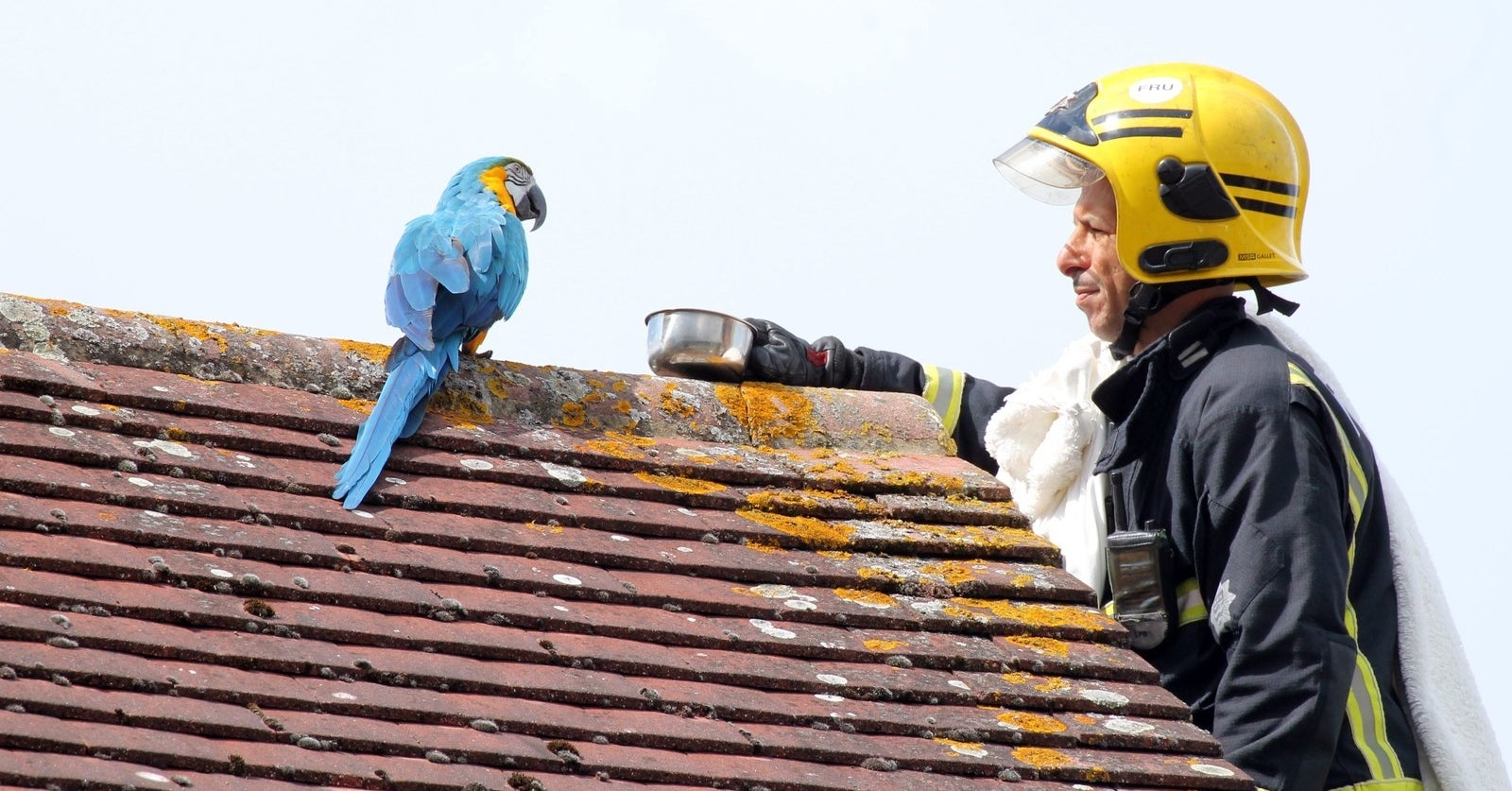 """A """"Potty-Mouthed Parrot"""" Told A Firefighter Who Tried To Rescue Her From A Rooftop To """"Fuck Off"""""""