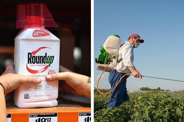 Monsanto's Herbicide Roundup Is Still Available In Australia After It Was Found To Be Carcinogenic. Here's...