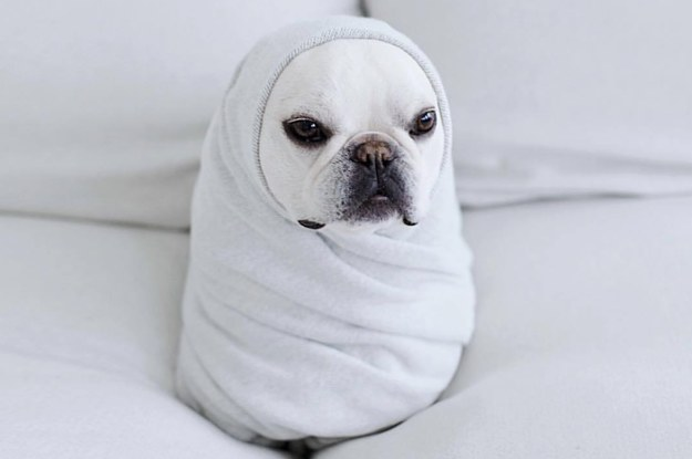 These BBs Wrapped Like Burritos Will Get You Through Your Morning Slump