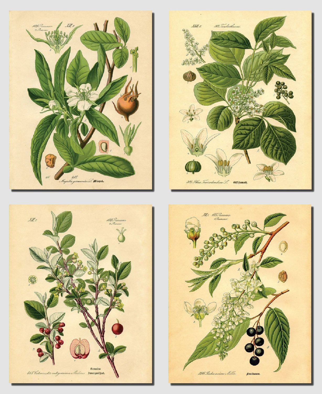 Vintage-style botanical prints