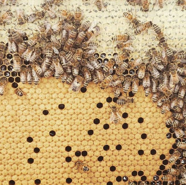 8 Practical Things You Can Do To Help Save The Bees
