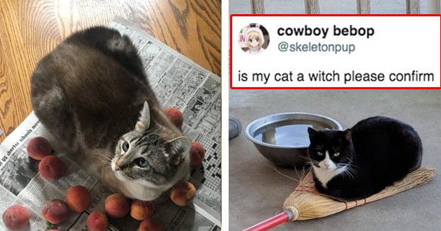 11 Cats That Are Little Angels And 11 Who Show No Mercy