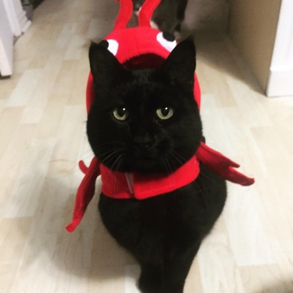 17 Reasons You Should Never Adopt A Black Cat