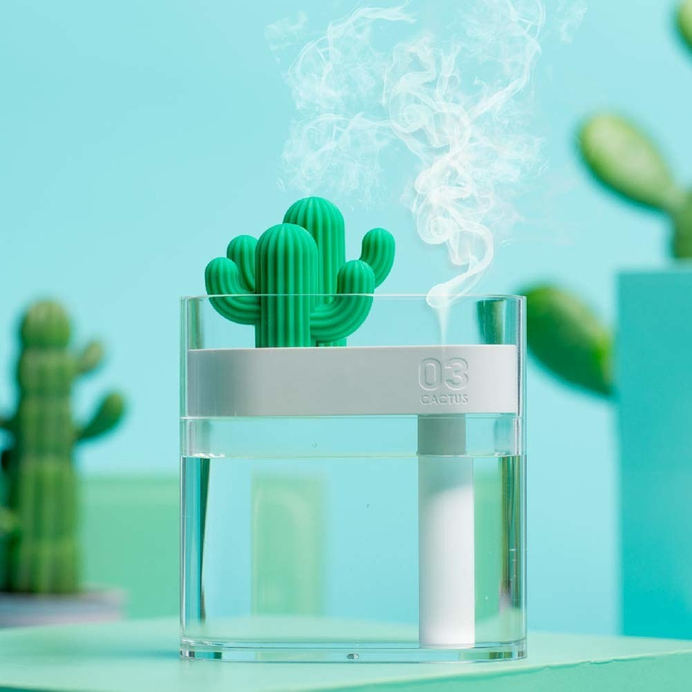 clear glass humidifier with two small green cacti on top and steam coming out of it
