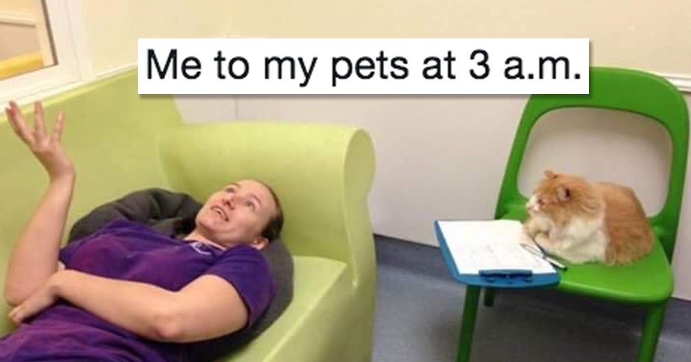 29 Animal Tweets That Are Just Really, Really Funny And Really, Really Cute
