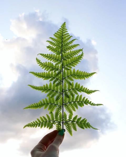 En The Nature Fix, Florence Williams explica que los fractales son objetos donde aparecen los mismos ángulos y patrones matemáticos una y otra vez en distintos tamaños. ¿Ves cómo las hojas más pequeñas de este helecho reflejan la forma general de las ramas y también el helecho en sí? ¡Eso es un fractal! O piensa en las ramas que salen del tronco de un árbol. Resulta que a menudo salen todas del árbol exactamente en el mismo ángulo pero a distinta escala según el tamaño de la rama. Los fractales aparecen por toda la naturaleza: en las nubes, en las costas, en los copos de nieve, en los pulmones humanos, en las conchas, los ríos, las galaxias...