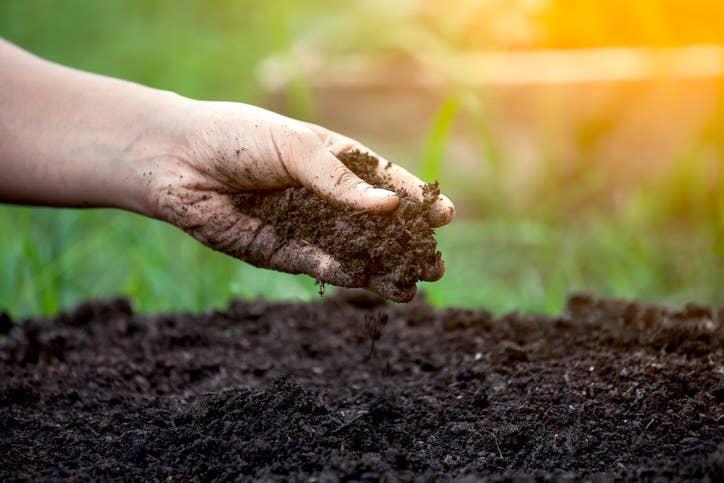 En su libro This Phenomenal Life, Misha Blaise escribe que existe una bacteria específica del suelo, la Mycobacterium vaccae, que activa las neuronas que generan serotonina en el cerebro, las mismas neuronas sobre las que actúan muchos antidepresivos.