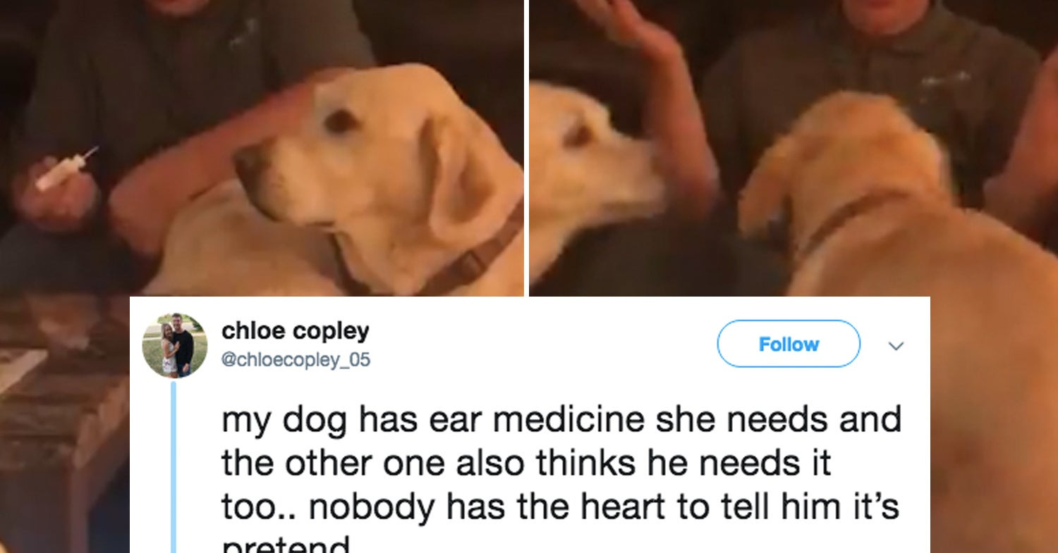 This Dad Pretending To Give His Dog Ear Drops Is The Purest Thing