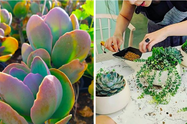 buzzfeed.com - tomvellner - 6 Things You Need To Know About Caring For Succulents