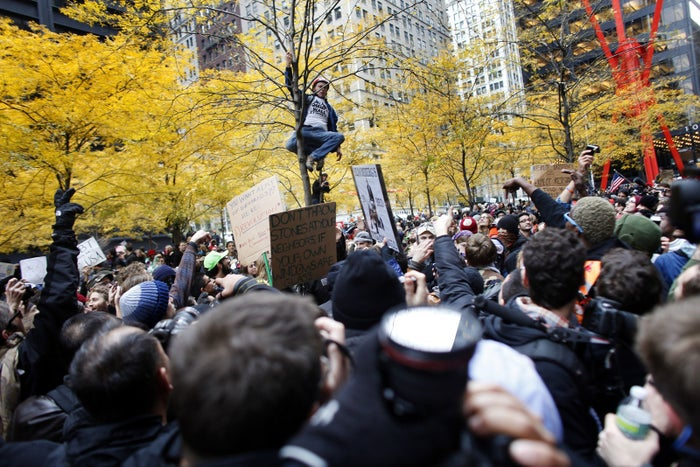 A protester climbs a tree in Zuccotti Park on Nov. 17, 2011.