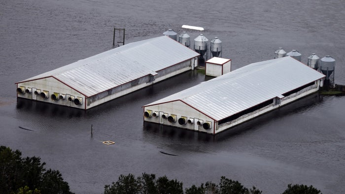 A hog farm inundated with floodwaters from Hurricane Florence near Trenton, North Carolina.