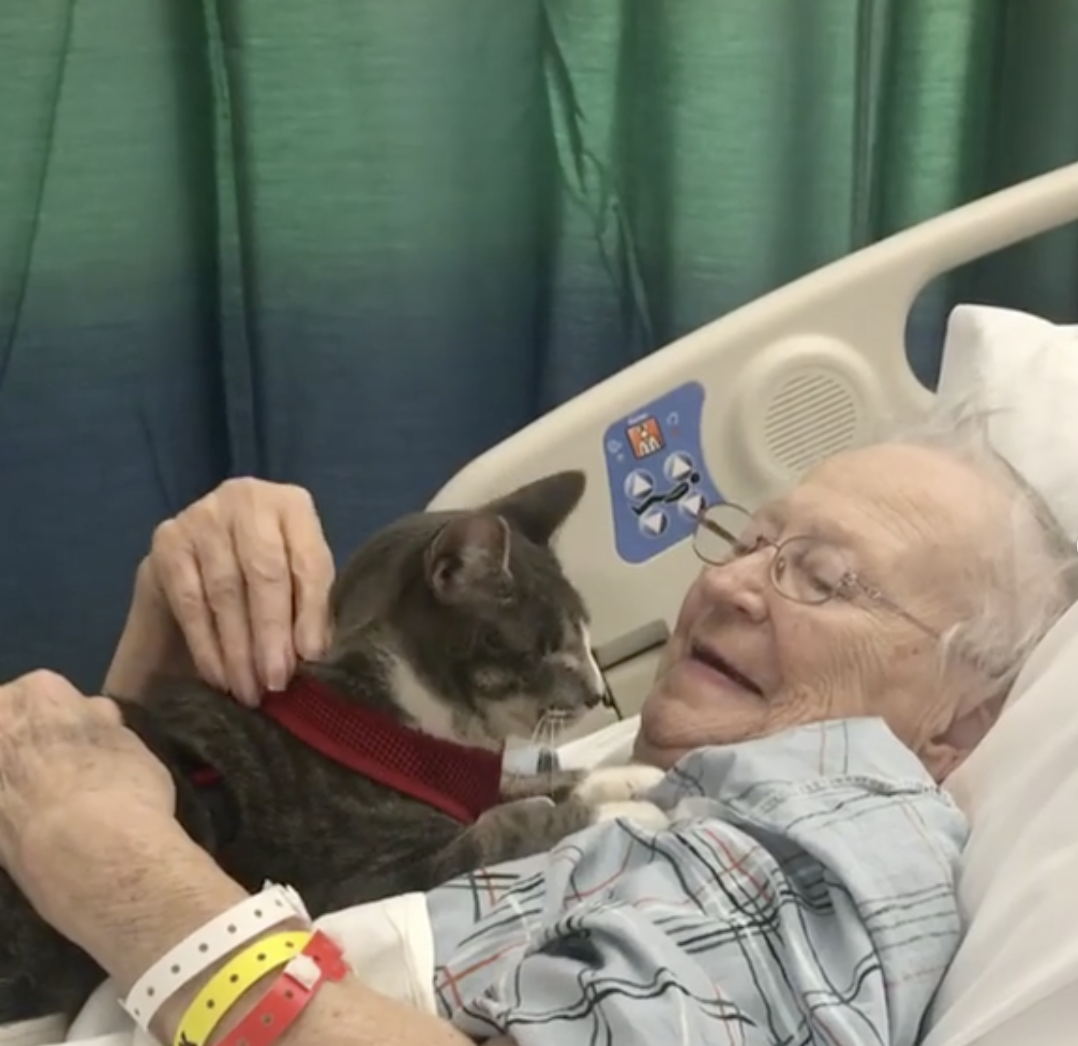 This Kitty Visiting An Elderly Woman In The Hospital Is Guaranteed To Make You Smile