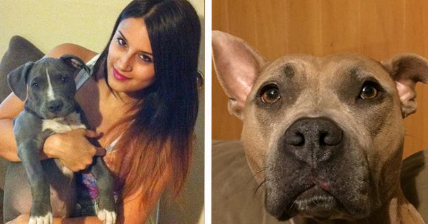 This Woman Fosters Pit Bulls And It's The Purest T...