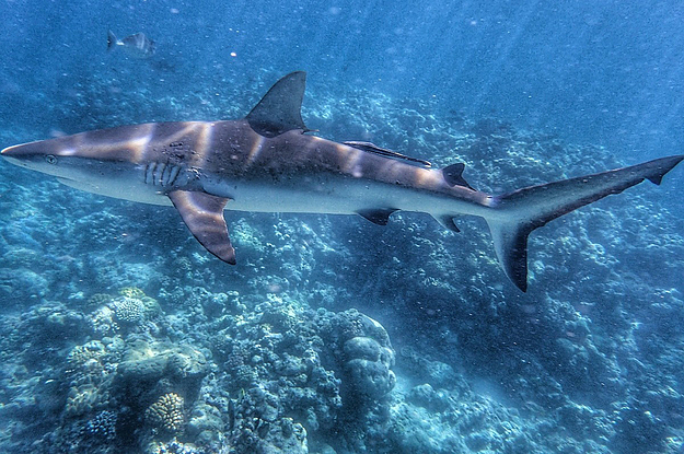 There Have Been Two Shark Attacks In The Whitsundays In 24 Hours