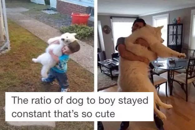 29 Tweets & Tumblr Posts Anyone With A Small, Fluffy Dog