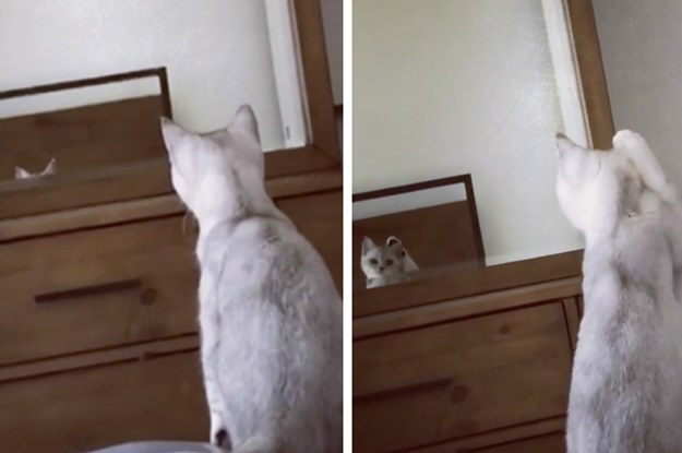 This Cat Just Discovered It Has Ears And It's Too ...