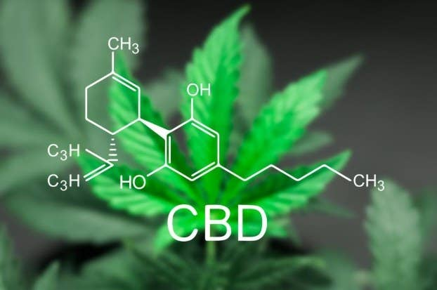 "CBDistillery is one of the nation's largest and fastest growing distributors and retailers of hemp-derived Cannabidiol (CBD) products. Founded by a group of Colorado natives, CBDistillery is at the epicenter of the booming CBD industry, leading the charge for product innovation, establishing industry standard pricing, educating consumers, and providing the most up-to-date industry news. With the U.S. Senate recently voting to legalize hemp and the CBD eCommerce market expected to reach the $3 billion mark by 2021, the buzz about hemp-derived CBD has never been louder and the conversation about this naturally occurring compound has never been more positive. There are more questions than ever and CBDistillery is here to answer all of them and debug the myths surrounding this gift from nature. cbdMD CBD from cbdMD is amazingly awesome! All of their CBD products come from industrial hemp grown right here in the United States. They offer the highest quality CBD extracts available in today's market and provide more significant concentrations of CBD per milligram. cbdMD goes the extra mile - and spares no expense - to supply consumers with premium-grade CBD. By using clean CO2 extraction, cbdMD bottles full-spectrum CBD extracts that contain terpenes, cannabinoids, and other nutrients that complement CBD compounds and enhance health benefits. Each batch of CBD oil from cbdMD is vigorously tested through independent, third-party laboratories to guarantee the purity. HempLucid Hemplucid uses a whole-plant formulation in their CBD products, using the entire hemp plant for extraction. Their oils include the diverse ingredients of the natural hemp plant: phytocannabinoids, numerous vitamins and minerals, terpenes, and other phytonutrients, providing the known therapeutic efficacy associated with full-spectrum hemp. CBD Lion THE CBD LION EXPERIENCE (Their PRODUCTS) All of their products are two-time, third-party lab tested to guarantee proper potency and quality. Their CBD is derived from all organic, NON-GMO hemp grown in the United States. All there vape/product flavors are handcrafted with all organic terpenes to mimic strain specific cannabis profiles. With their products providing an experience that tastes similar to Award Winning cannabis strains such as Sour Diesel, Strawberry Cough, Sour Tangie, Ghost Train Haze, Blueberry, etc. They allow customers to get the benefits of CBD and terpenes, without the anxiety or psychoactive effects of THC. Their products provide a ZERO THC experience for customers. They also have all test results readily available to download by scanning the QR code below or view at their website at WWW.CBDLION.COM under the Test Results tab. Seed Science was founded in 2016 on Hilton Head Island, SC by Tim McDougall and Courtney Di Stasio. After spending a decade in the industry, McDougall moved his company to Seattle, WA to expand with the drive to provide premium wide spectrum hemp oil products (without traces of THC) to anyone in search of a risk-free alternative medicine. Whether we're on the east or west coast, the Seed Science team has always had one motto: healthy, not high. Seed Science proudly provides products for the whole family, even their fur-babies, by utilizing the entire hemp plant for a full spectrum oil via medical-grade CO2 extraction. Their vertically integrated model allows us to monitor their harvesting and manufacturing process from seed to shelf, making sure their customers receive consistently reliable and effective products. CBD Oil Solutions CBD Oil Solutions is the largest online marketplace for CBD Oil products on the Internet. The store carries over 200 different kinds of CBD products from nearly 20 brands. Product categories include Tinctures, Vape Oils & Pens, Edibles including Gummies, Caramels, and Chocolate bars along with Capsules, Topicals and Creams, Concentrates and even Beauty products all with CBD including both full-spectrum and isolate based offerings. Founded in August 2017, CBD Oil Solutions carries brands ranging from industry leaders like CBDistillery, Blue Moon Hemp and CBDfx along with smaller brands like Tonic, Prestige, and Remedi with free shipping offered on every order. CBD Drip Their production process begins with the harvesting of European Grown EU certified hemp stalks from male hemp plants. Next, the hemp is imported and inspected by US Customs and Homeland Security. This biomass is then shipped to their production facility where their full spectrum hemp oil is extracted using a clean, non-solvent based critical CO2 extraction process. Finally, this raw oil is transported to their production facility where it undergoes final proprietary formulation to create the final products that you see on their site. They believe in a natural full-spectrum hemp product! www.cbddrip.com CBD for Life Founded by sisters, Beth Stavola (CEO) and Julie Winter (COO), CBD For Life launched after Beth learned about the healing properties of CBD. She infused CBD with essential oils to create a rub to help manage her chronic back pain caused by scoliosis of the spine. CBD For Life produces innovative, natural and effective Cannabidiol (CBD) infused pain management and beauty products using 99% pure CBD extract derived from stems and stalks of industrial hemp. Their revolutionary formulas aid in reducing pain, inflammation, and stress while promoting anti-aging, rejuvenation, and vibrancy. They are proud to be a women-owned and operated company. Their products are 95% naturally derived and are free of GMO's, parabens, phthalates, formaldehyde, artificial coloring and are never tested on animals. Green Roads ""Green Roads is the leading CBD manufacturer in the U.S., with products in 7,000+ retail stores, impacting over 3 million lives. Their pharmacist-formulated products include only the highest grade hemp-derived CBD extract, rich in all the beneficial terpenes of the hemp plant. They also allow access to third-party lab sheets for every product made, so customers know that what's on the label is what's in the bottle. They've made it their mission to set the new standard for quality and transparency in the hemp industry and proudly offer the safest, cleanest, and purest CBD products available anywhere."" CBD SuperStore HempCBDSuperStore.com is your #1 trusted Wholesale Supplier and Retailer of compliant Hemp CBD. They carry the best products so you can login and choose from over 50 brands and 20 categories. Shops can create a wholesale account and gain access to wholesale pricing with no minimum order quantity to thousands of products. You can make your own cbd brand with hemp cbd superstore through private label or custom formulations. Make sure to subscribe by creating a login for discount and news."