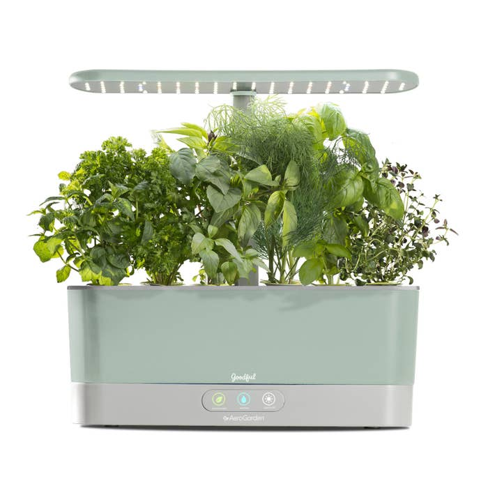 Truly a dream. Plus, this little beauty requires almost no maintenance and adds a ~healthy~ vibe to any kitchen. Snag one here!