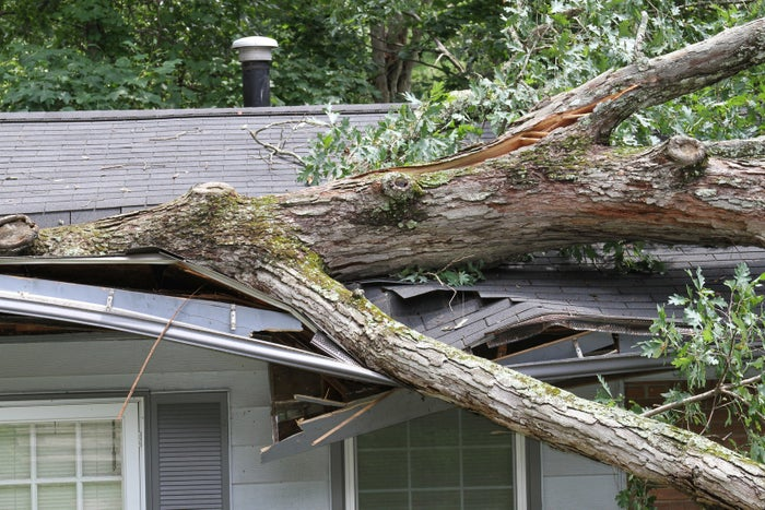 In order to reduce the risk of toppled trees or fallen branches, prune dying limbs and secure split trunks. Browning leaves, peeling bark, and mushroom growths are all signs your tree might be likely come down during a storm. In that case, call a landscaper or an arborist (AKA a tree doctor) to take a look ASAP.