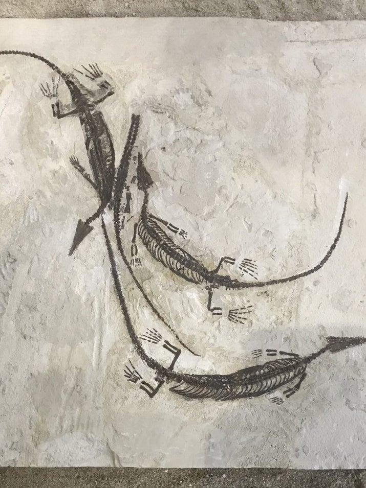 Mesossaurídeos: um dos primeiros grupos de amniotas (animais cujos embriões são rodeados por uma membrana amniótica) a se adaptarem a um ambiente aquático.