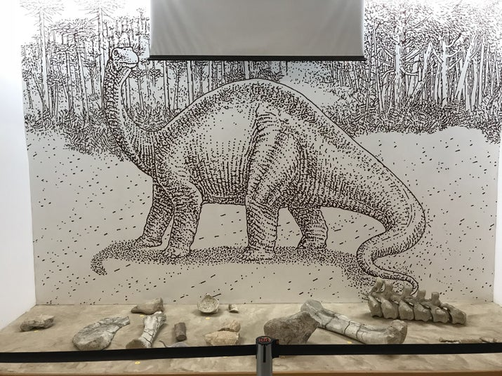 Fósseis de Titanossauros: dinossauros herbívoros que chegavam a atingir 12 metrossexual comprimento. São fragmentos do fêmur, costela, rádio, vértebras caudais e dorsal.