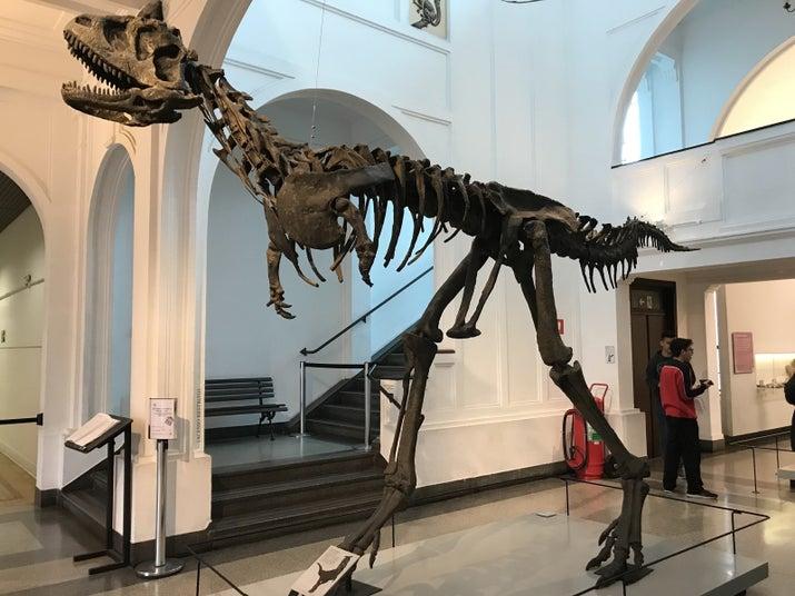 Réplica Carnotauro: espécie encontrada na Argentina que existiu no período Cretáceo, 72 milhões de anos atrás.