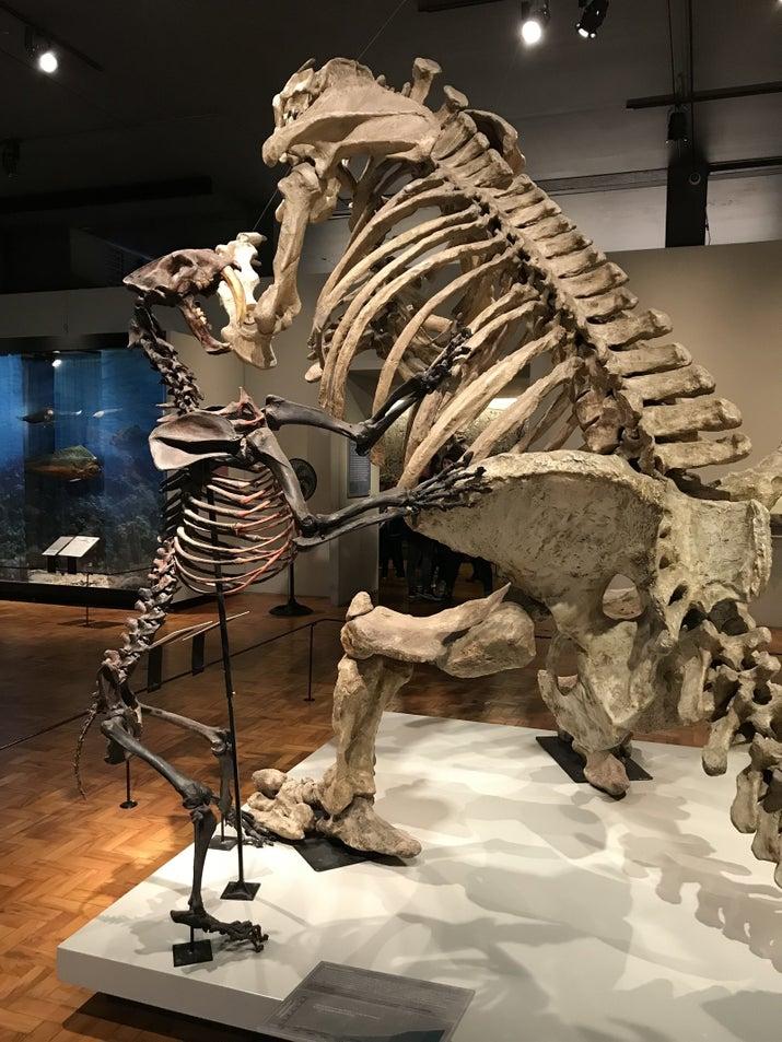 Réplica Tigre Dentes De Sabre e Preguiça Gigante