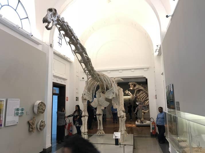 Réplica Tapuiassauro: Viveu há 160 milhões de anos (Cretáceo) e seus fósseis foram encontrados no norte de Minas Gerais.