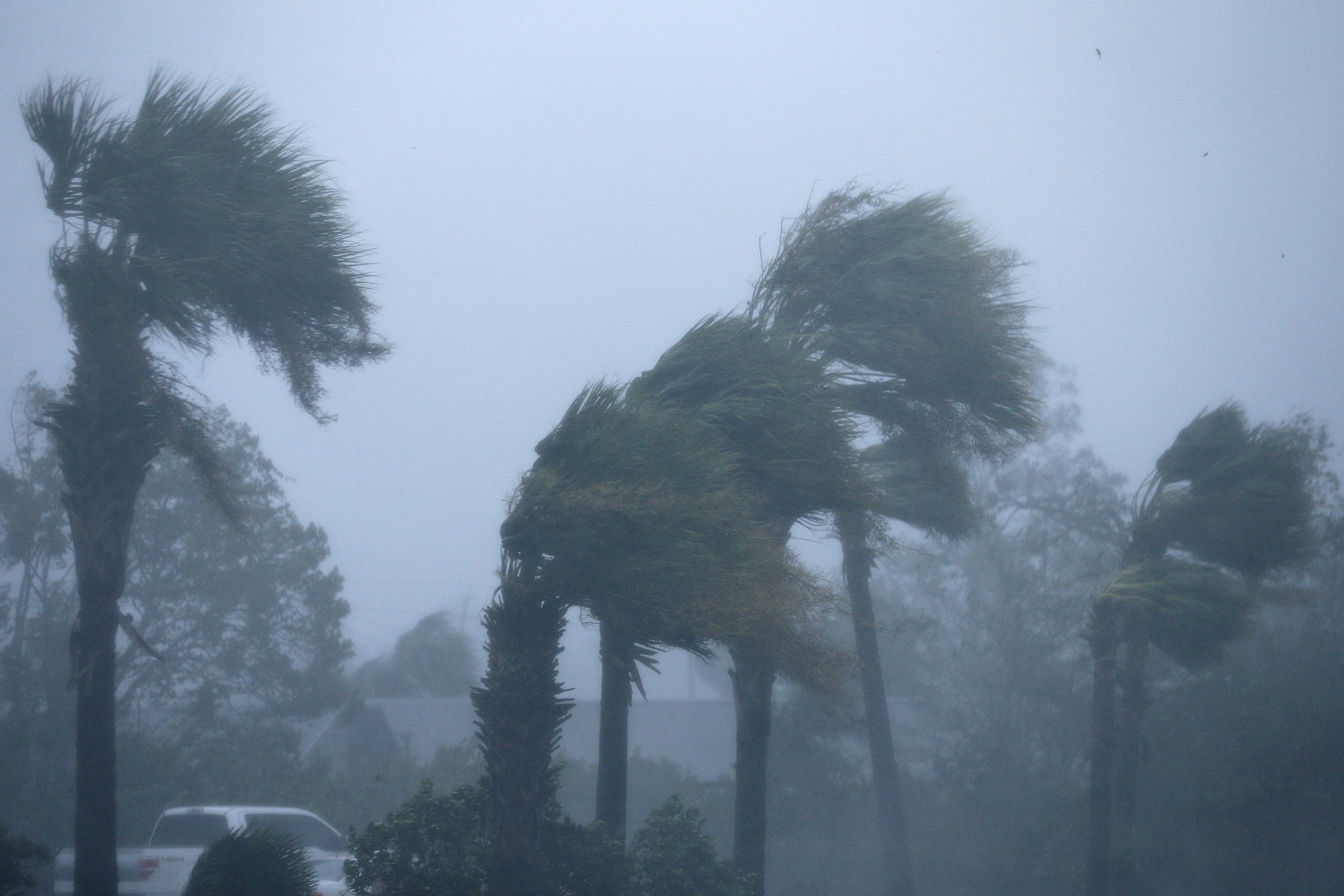 Palm trees are seen during Hurricane Michael in Panama City Beach, Florida.