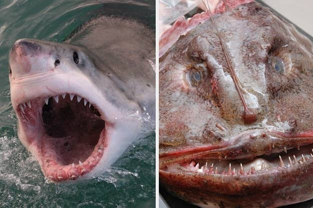 """Which Shark From """"Baby Shark"""" Song Are You?"""