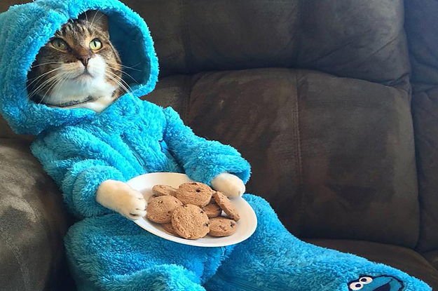 This Photo Of A Cat Wearing Cookie Monster Pyjamas Was Accidentally Emailed Out By The US State Department