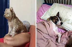 15 Photos Of Extremely Sleepy And Snuggly Dogs That You Need To See Today
