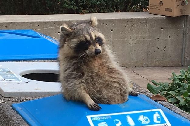 19 Trash Pandas Guaranteed To Brighten Your Day