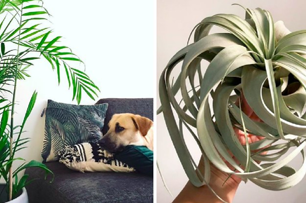 15 Houseplants That Are Beautiful And Safe For Cats And Dogs