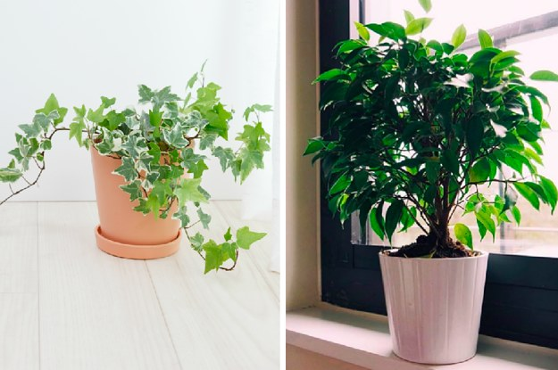 15 Gorgeous Plants That'll Actually Purify The Air In Your Home