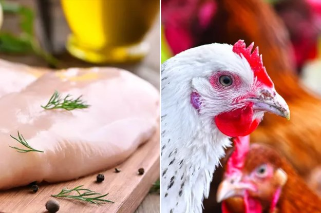 92 People Got Sick From Raw Chicken Contaminated With Antibiotic-Resistant Salmo...
