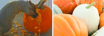 Hi There, Please Don't Throw Your Halloween Pumpkins In The Trash