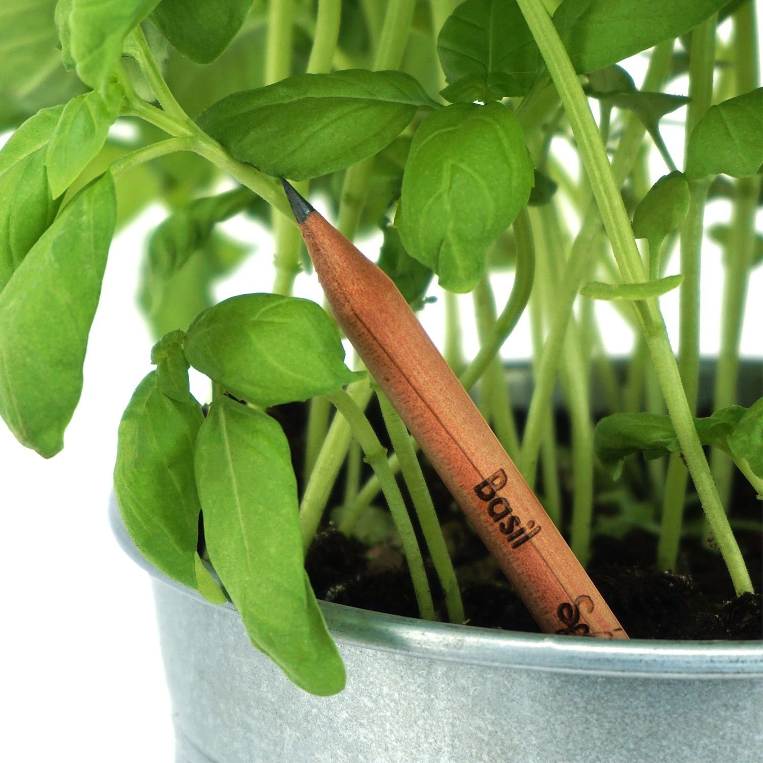 a pencil that says basil on it that has been planted in soil