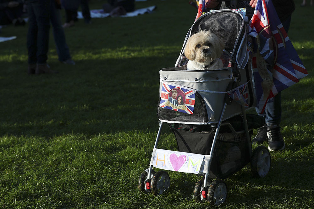 A dog celebrates Harry and Meghan's wedding in Windsor.