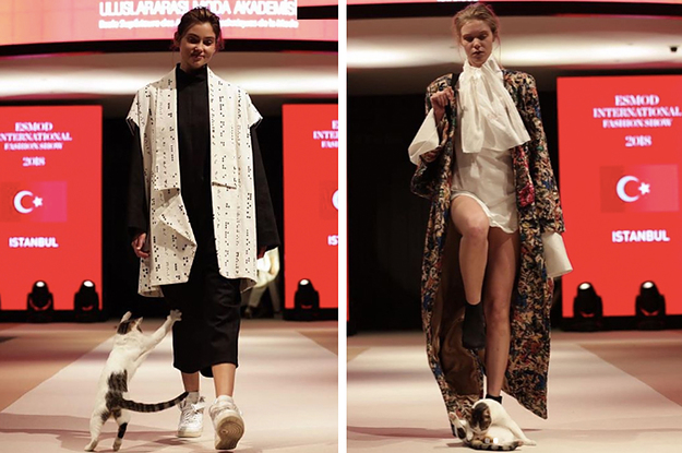 d7d313ec3e A Cat Made A Surprise Appearance At A Fashion Show And People Love It